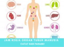 CATAT! Jam-Jam Penting Organ Tubuh yang Harus Dipahami